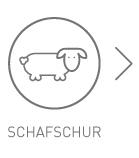 Maehrle Wolle Liveticker Schafschur